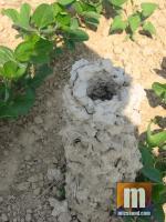 Gigantic crawdad mud castle